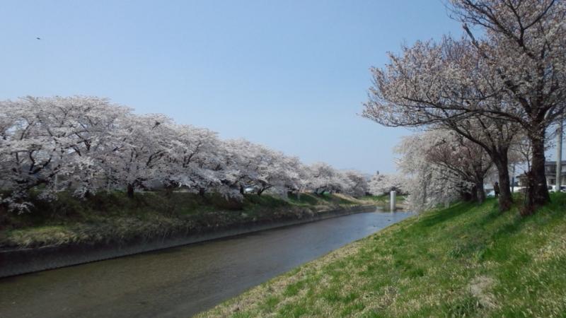 春を背負って10.jpg